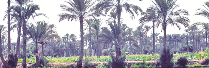 Egypt Agriculture
