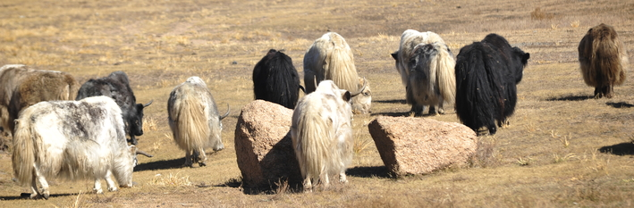 Mongolia Agriculture 2012