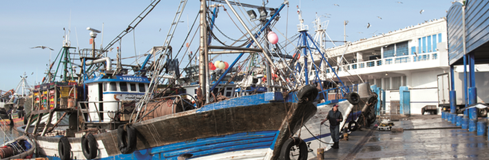Morocco Agriculture & Fisheries
