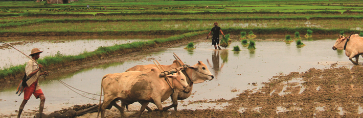Myanmar Agriculture And Forestry