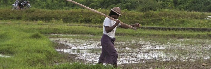 Myanmar Agriculture 2014