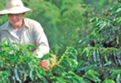 Colombia Agriculture