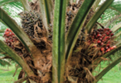 Malaysia palm oil exports