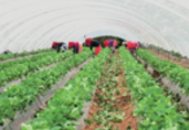 Morocco organic agriculture