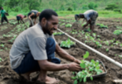 PNG agriculture