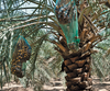 UAE: Abu Dhabi - Agriculture & Food Security